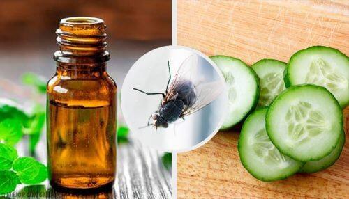 7 repellenti naturali per le mosche