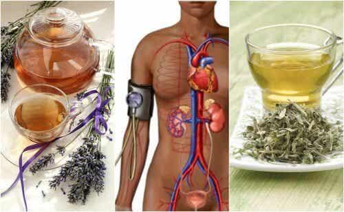 Abbassare la pressione arteriosa con 5 rimedi alle erbe