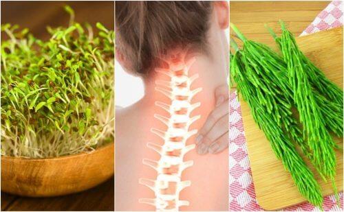 7 piante medicinali per prendersi cura della salute ossea