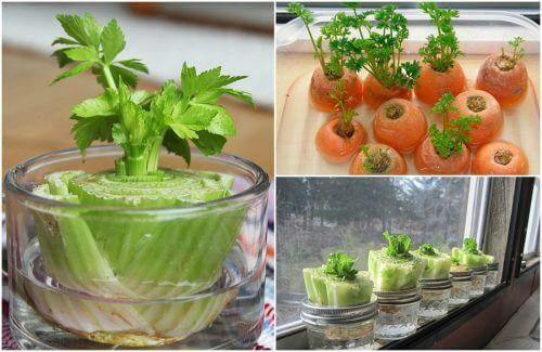 5 verdure da coltivare in casa con semplici trucchi