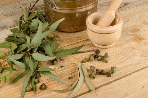 l'eucalipto è un ottimo rimedio per eliminare pidocchi e lendini