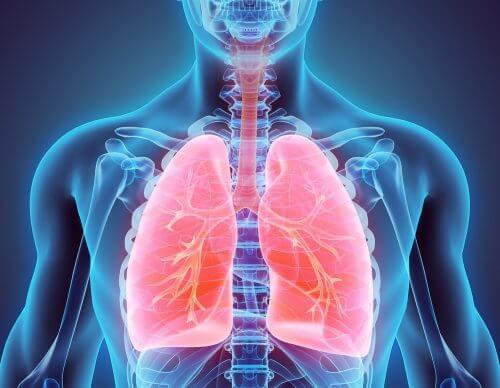 Smettere di fumare e disintossicare i polmoni