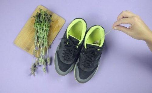 scarpe e rametti di lavanda