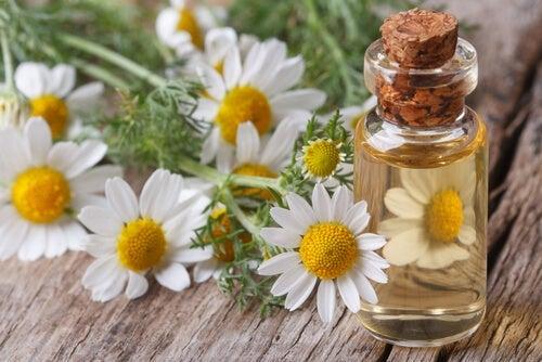 Proprietà medicinali della camomilla