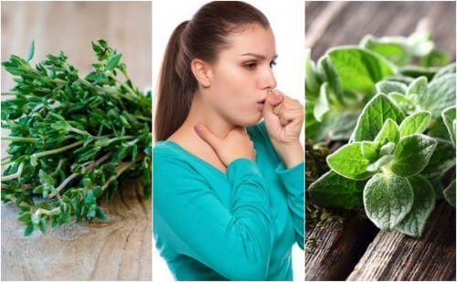Alleviare la tosse grassa con 5 piante medicinali