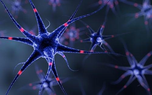 Supporto del sistema nervoso