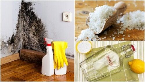 Eliminare umidità e muffa in casa con prodotti naturali