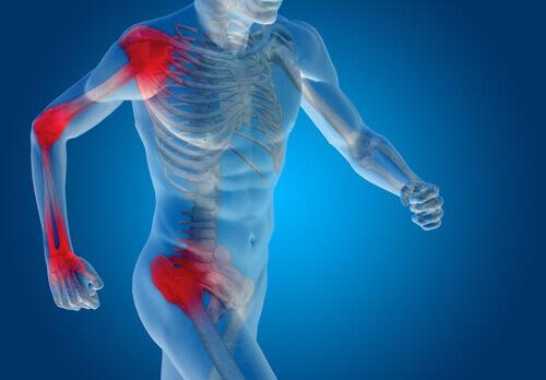 Immagine del corpo umano con cartilagini e legamenti