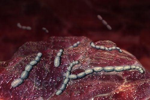 Batteri streptococchi della scarlattina