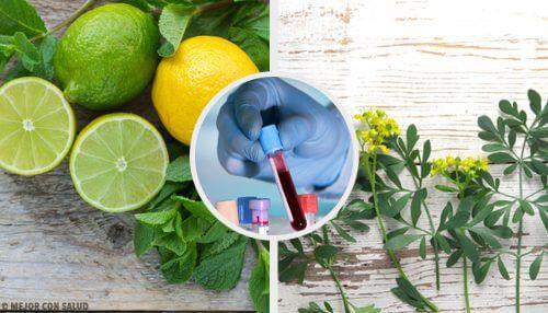 Scoprite il carrulim, il rimedio depurativo a base di ruta e limone
