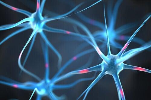 Connessione tra neuroni