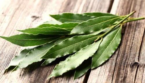 l'eucalipto è uno dei migliori rimedi naturali contro le allergie
