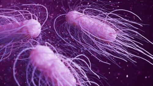 I batteri più pericolosi per gli esseri umani