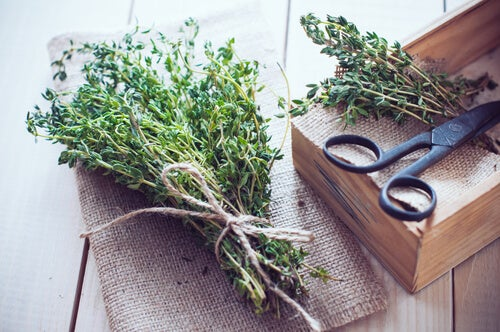 Mazzetti di erbe medicinali per preparare il carrulim