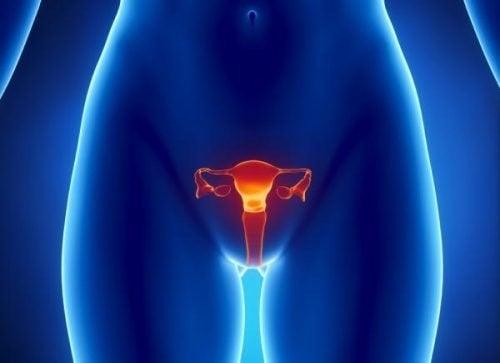 immagine utero e ovaie