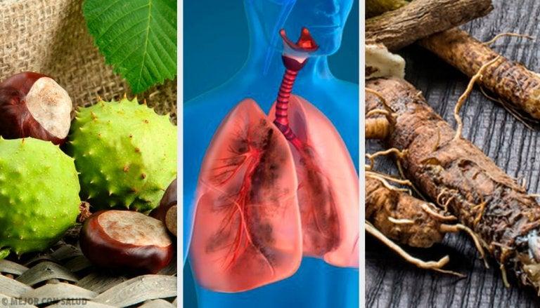 Rafforzare i polmoni e respirare meglio: 4 rimedi