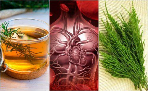 Migliorare la circolazione del sangue con erbe medicinali