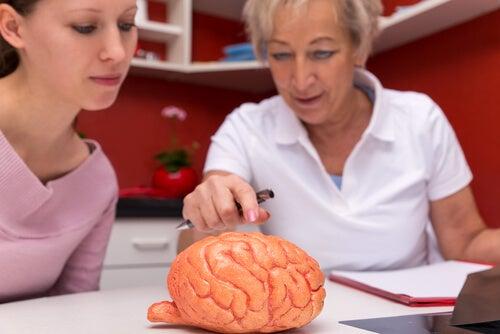 Studio del cervello
