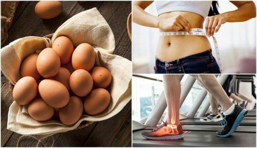 Includere le uova nella dieta: 7 buoni motivi
