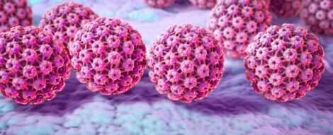 Virus del papilloma umano.