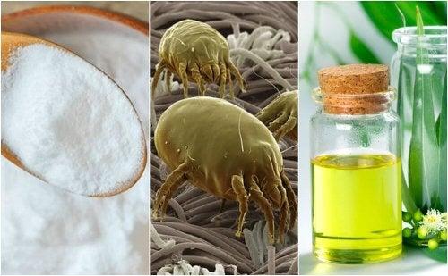 4 soluzioni efficaci contro gli acari