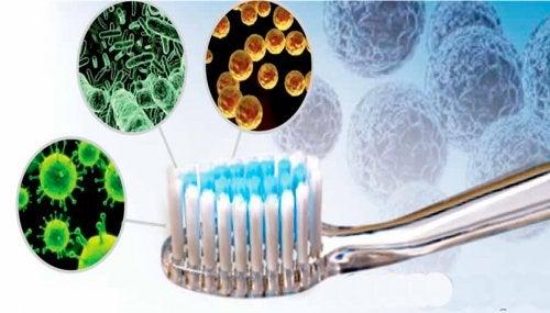 L'acqua ossigenata disinfetta lo spazzolino da denti