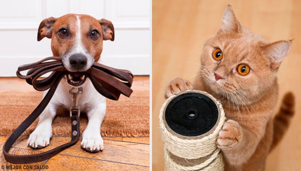 Quale animale domestico fa più bene alla salute?