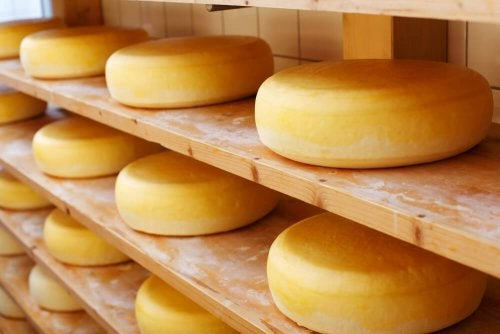 forme di formaggio Cheddar