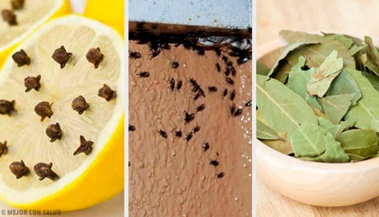 Eliminare gli insetti in modo naturale