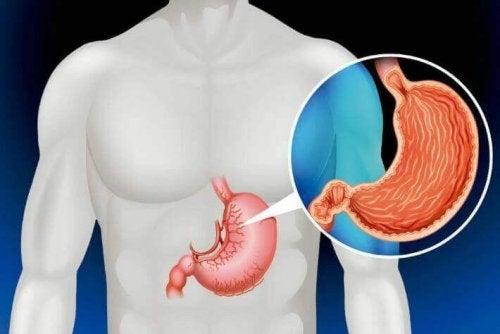 Stomaco tra i 7 organi non necessari per vivere