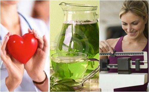 Bere tè verde: 6 importanti benefici