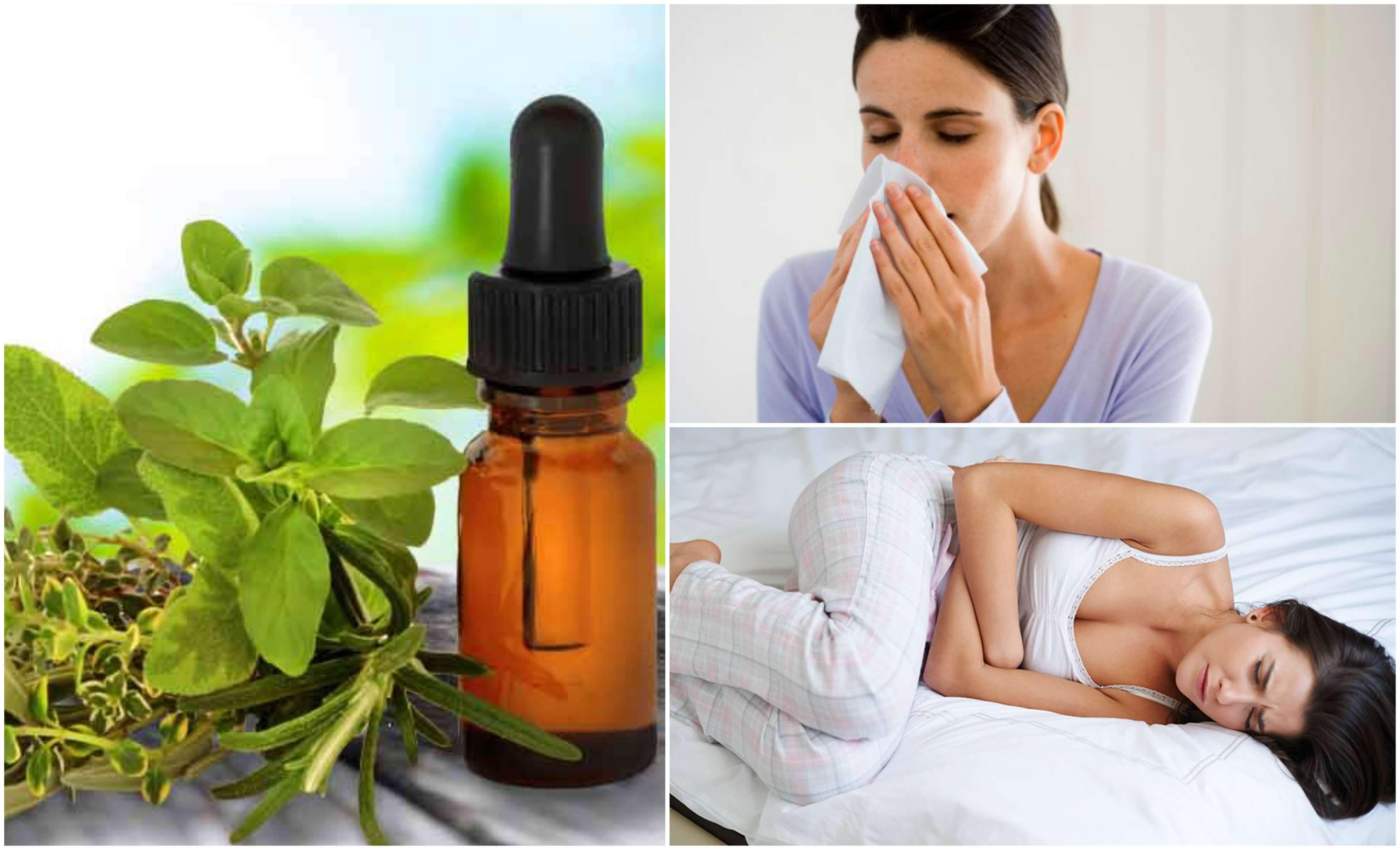 Usi medicinali dell'olio di origano