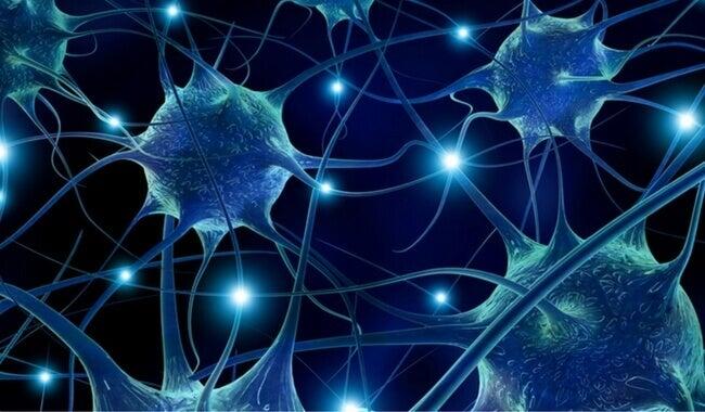 Connettività neuronale