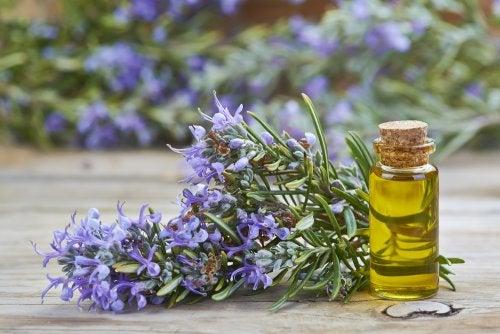 Olio rosmarino per stimolare la crescita dei capelli