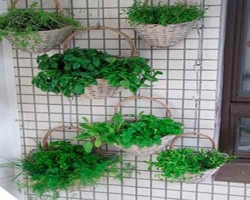Giardino interno con piante appese