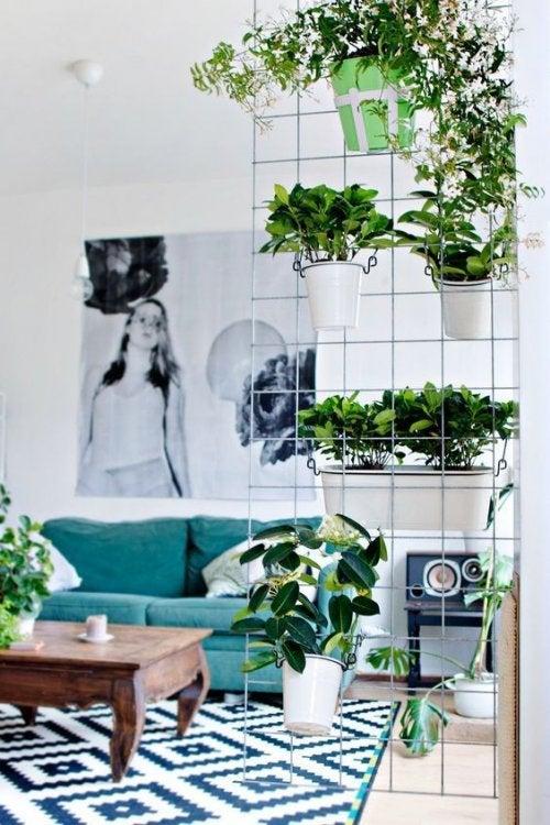 Separatore con piante ornamentali
