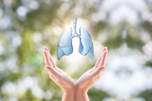 mani aperte e immagine luminosa dei polmoni