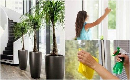 Migliorare la qualità dell'aria in casa: 6 consigli