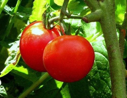 Pomodori e costipazione