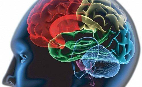 Cranio al computer per illustrare la concentrazione