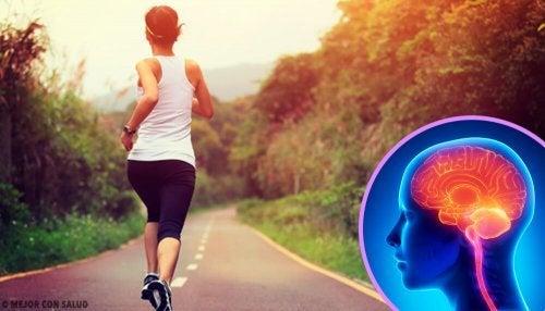 Interruzione dell'esercizio fisico: effetti sul cervello