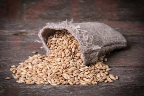Cereali integrali: orzo.
