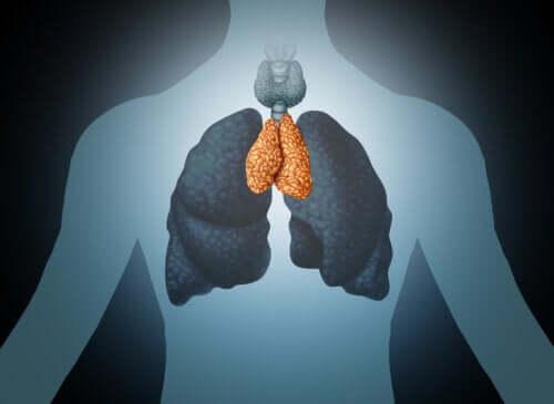Timo: ghiandola del benessere e del sistema immunitario