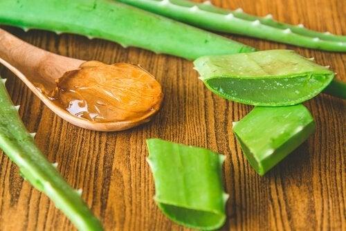 foglie di aloe vera