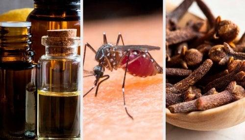 Insetti: 10 aromi per tenerli lontani