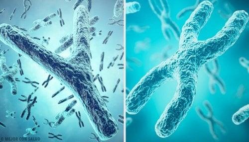 Origine genetica del sesso: i cromosomi X e Y