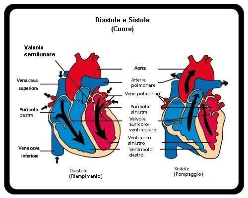 Diastole e sistole