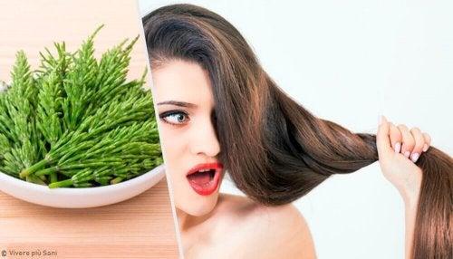 Equiseto per far crescere i capelli