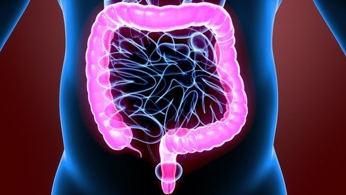 Fisiologia dell'intestino crasso