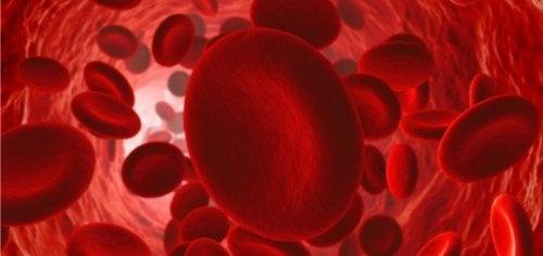 Come mantenere una buona circolazione sanguigna
